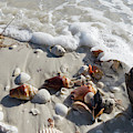 Seashells Wash Up On The Beach At Wiggins Pass In Collier County by William Kuta