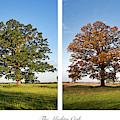 Seasonal Oak by Tim Gainey