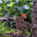 Secret Visitor To My Yard by Jeff Folger