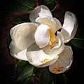 Seminary Magnolia In Oils by Harriet Feagin