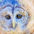 Send Me An Owl by Chris Scroggins
