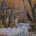 Serene Stream In Autumn by Catherine Avilez