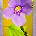 Sexy Sky Vine Flower by Sabrina L Ryan