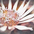 Seychelle by Cindy Greenstein