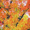 Shades Of Fall In Dallas by Lynn Bauer