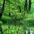 Shades Of Green In The Spreewald by Sun Travels