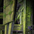 Shape And Green Rot No.6 by Juan Contreras