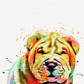 Shar Pei Dog by Nikolay Radkov