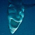Shark Devil by Rob Hans