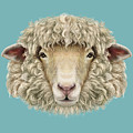 Sheep Portrait. Illustrated Portrait Of by Ant art