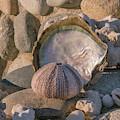 Shell Tableau by Jean Noren
