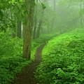 Shenandoah Spring Green At by Raymond Salani III