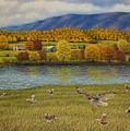 Shenandoah Valley Hawk by Charles Hill