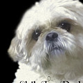Shih Tzu For Dad-bubba by Ericamaxine Price