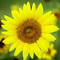 Shine Like A Sunflower by Sabrina L Ryan