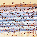 Shore Bird Abstract by Lost River Photography