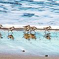Shorebirds by Vanessa Mccauley