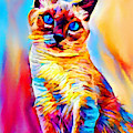 Siamese Cat by Chris Butler