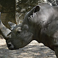 Side Profile Of A Large Rhinoceros With Two Horns  by DejaVu Designs