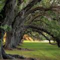 Side View Avenue Of Oaks by Darylann Leonard Photography