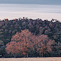 Sidelit Oaks And Hills In The Blanco River Valley Kendall County - Texas Hill Countr by Silvio Ligutti