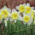 Signs Of Spring by Karen Adams