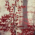 Silent Days by Dirk Wuestenhagen