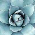 Silver Succulent by Micha Pawlitzki