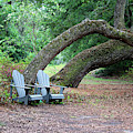 Sit For A Spell In Nature by Cynthia Guinn
