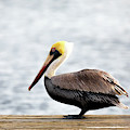 Sitting On The Dock Of The Bay by Susan Rissi Tregoning