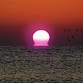 Sizzling Sunrise by D Hackett