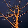skeleton Tree by Robert Potts