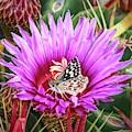 Skipper On Cactus Bloom by Kathy Jamieson