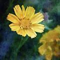 Small Blossom 7168 Idp_2 by Steven Ward