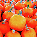 Small Pumpkins by Cynthia Guinn