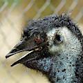Smiley Face Emu by Kaye Menner