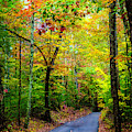 Smoky Mountain Autumn Colors by Debra and Dave Vanderlaan