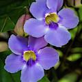 Smooth Purple Skyvine by Sabrina L Ryan