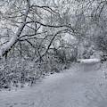 Snow 1 #i3 by Leif Sohlman