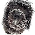 Snow Charlie by Cindy Greenstein
