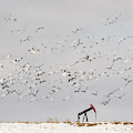 Snow Geese Over Oil Pump 01 by Rob Graham