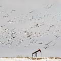 Snow Geese Over Oil Pump 02 by Rob Graham