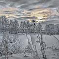 Snow #i3 by Leif Sohlman