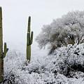 Snow In The Desert by Elaine Malott