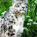 Snow Leopard, Leopard Art, Animal Decor, Nursery Decor, Game Room Decor,  by David Millenheft