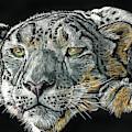 Snow Leopard by William Underwood