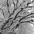 Snow Melt by Rosanne Licciardi