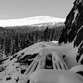 Snow Trellis by Jason Bohl