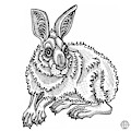 Snowshoe Hare by Amy E Fraser