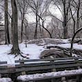 Snowy Benches by Alison Frank
